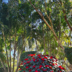 christmas flower plant with trees