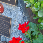close up geraniums at memorial park