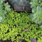 succulents at eco memorial park memorial gardens